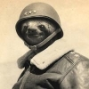 Well Made Blank Skin for the Gloster Meteor F. Mk.3 - last post by WGCDR_HotSloth