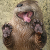 _otters